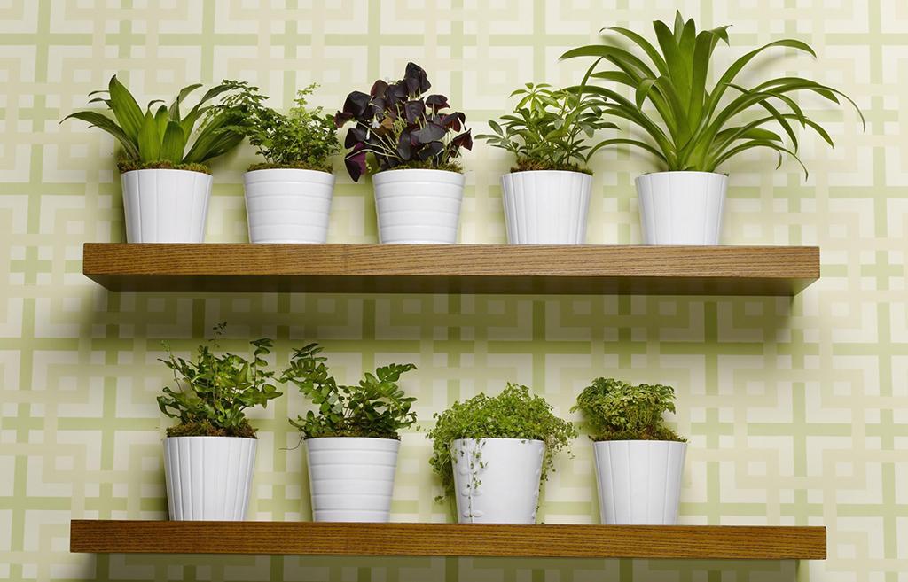 piante e fiori come valorizzare la stanza da bagno